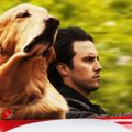 'The Art of Racing in the Rain' stars a dog named Enzo
